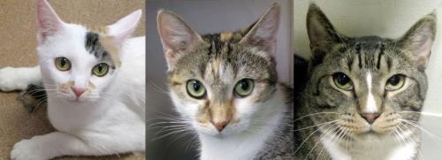e3cats11