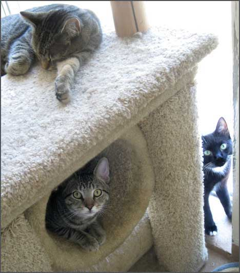 eepaws3cats
