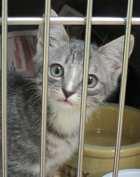 Edith-Kitten.jpg