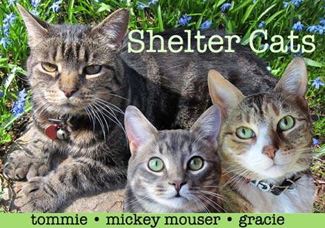 etmgShelter-Cats