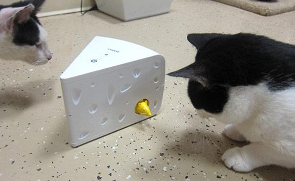 mtg standard cat deck